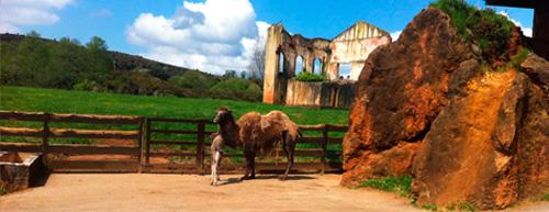 camellos_cabarceno