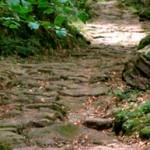 La Calzada Romana desde Pesquera hasta Bárcena de Pie de Concha