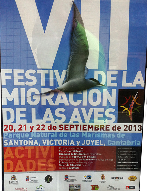 festival-migracion-de-las-aves-santoña