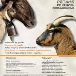 VIII Certamen Regional de Oveja y Cabra en Potes los días 16 y 17 de Noviembre
