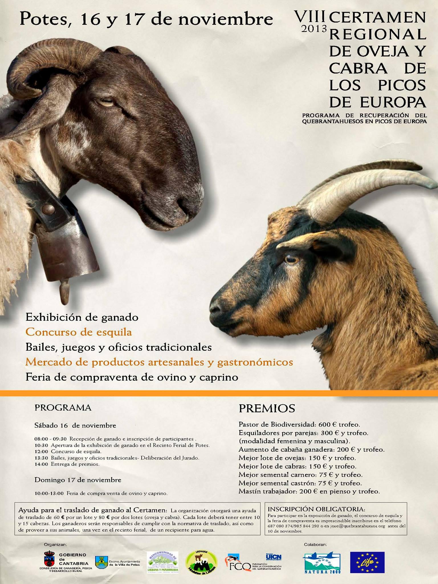 certamen de ovejas y cabra en potes