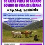 I Concentración de Ganado bovino en Vega de Liébana el día 16 de Noviembre