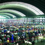 Mercado Nacional de Ganados de Torrelavega